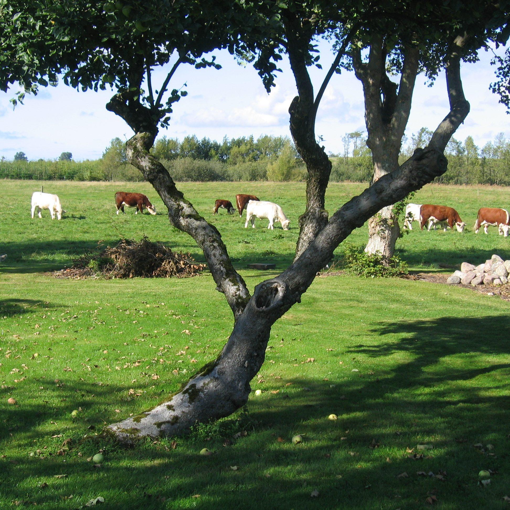 koeer-til-hjemmeside-146